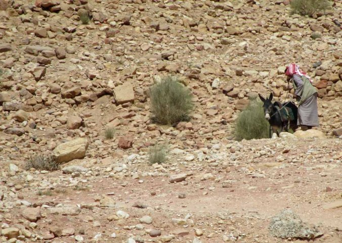 petra 26_for web