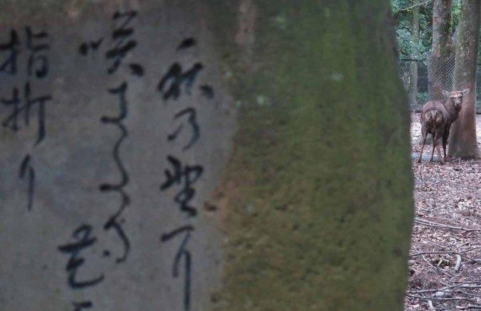 kyoto 064